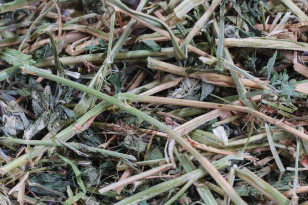 luzerne-hooi-alfalfa